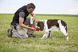 Germany, Lower Bavaria, Man feeding English Springer Spaniel in grass field while training
