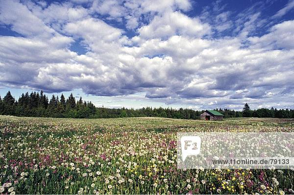 Blumenwiese Englisch halboffene bogenhalle best bett kfig bett images on