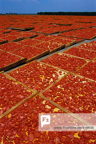 sonne trocknen tomaten lizenzfreies bild bildagentur. Black Bedroom Furniture Sets. Home Design Ideas