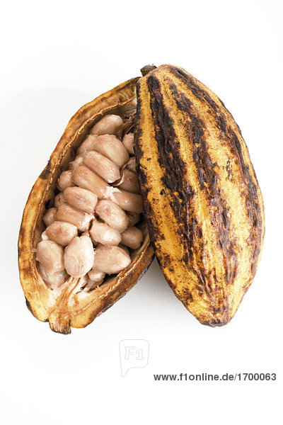 ansprechpartner cacao 0: