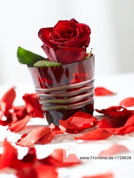 rote rose im rotem glas lizenzfreies bild bildagentur f1online 1725638. Black Bedroom Furniture Sets. Home Design Ideas
