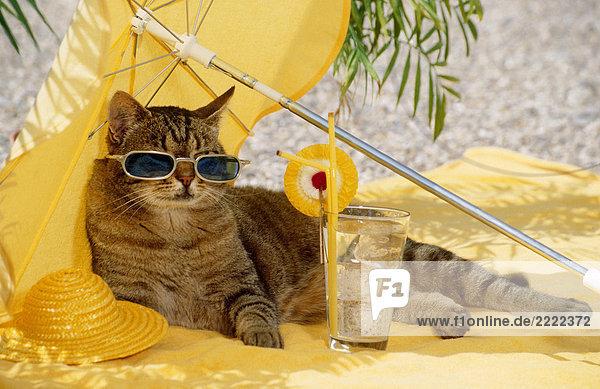 getigerte katze mit sonnenbrille unter sonnenschirm lizenzfreies bild bildagentur f1online. Black Bedroom Furniture Sets. Home Design Ideas