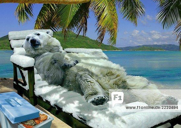 eisb r auf liegestuhl am strand lizenzfreies bild bildagentur f1online 2222494. Black Bedroom Furniture Sets. Home Design Ideas