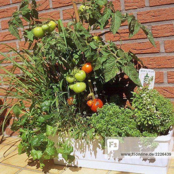 tomaten und kr uter in balkonkasten lizenzfreies bild bildagentur f1online 2226439. Black Bedroom Furniture Sets. Home Design Ideas