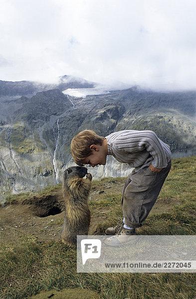 5-jährig,Alpen,Alpenbewohner,Alpenmurmeltier,Alpentier,Ansicht