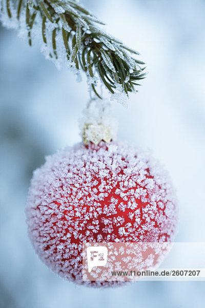 rote weinachtskugel weihnachtskugel mit frost berzogen an ast eines verschneiten baumes. Black Bedroom Furniture Sets. Home Design Ideas