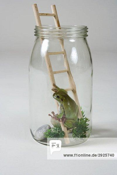 ein frosch in einem glas auf einer leiter lizenzfreies bild bildagentur f1online 2925740. Black Bedroom Furniture Sets. Home Design Ideas