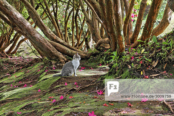 hauskatze unter rhododendron baum parque das quimeidas madeira portugal lizenzfreies bild. Black Bedroom Furniture Sets. Home Design Ideas