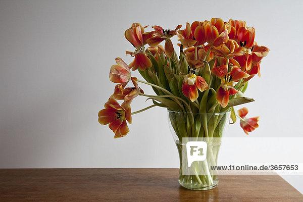 bl hende fast verbl hte tulpen lizenzfreies bild bildagentur f1online 3657653. Black Bedroom Furniture Sets. Home Design Ideas