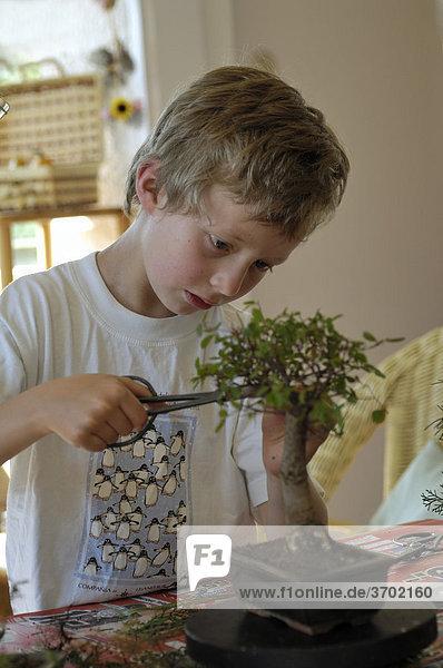 10j hriger junge beim bonsai schneiden lizenzfreies bild bildagentur f1online 3702160. Black Bedroom Furniture Sets. Home Design Ideas