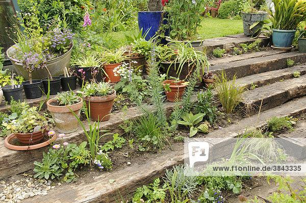 england europa gro britannien mit einj hrigen pflanzen stauden und k belpflanzen bepflanzt. Black Bedroom Furniture Sets. Home Design Ideas