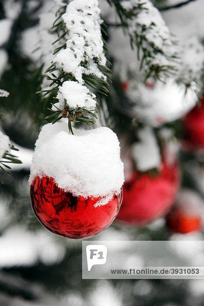 verschneiter weihnachtsbaum mit roten kugeln. Black Bedroom Furniture Sets. Home Design Ideas