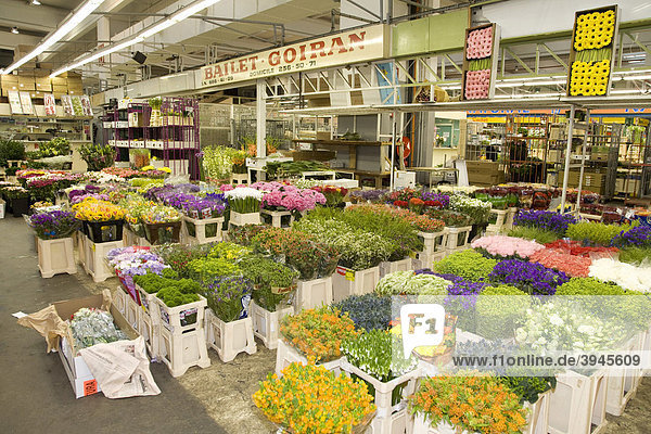europa frankreich gro markt rungis bei paris halle f r blumen pavillon des fleurs. Black Bedroom Furniture Sets. Home Design Ideas