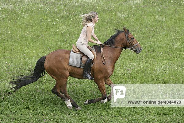 reiterin auf pferd galoppiert über eine grüne wiese