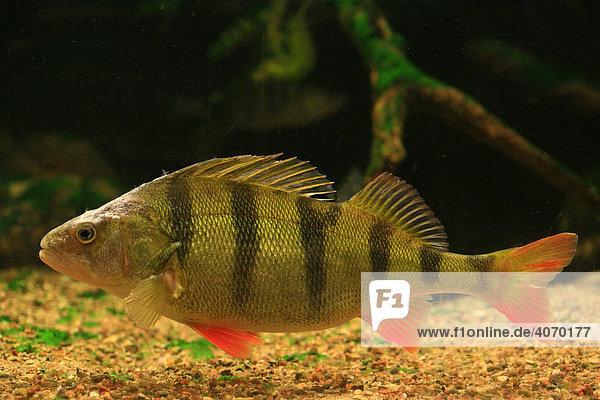 deutschland deutschlands gr tes aquarium f r einheimische s wasserfische europa mecklenburg