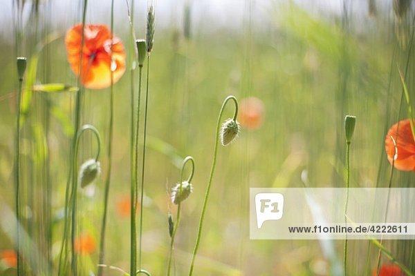 Blumen auf Wiese