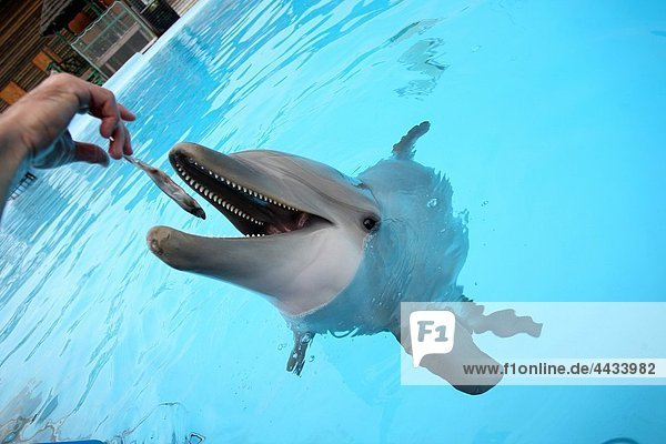 Nahrung Delfine