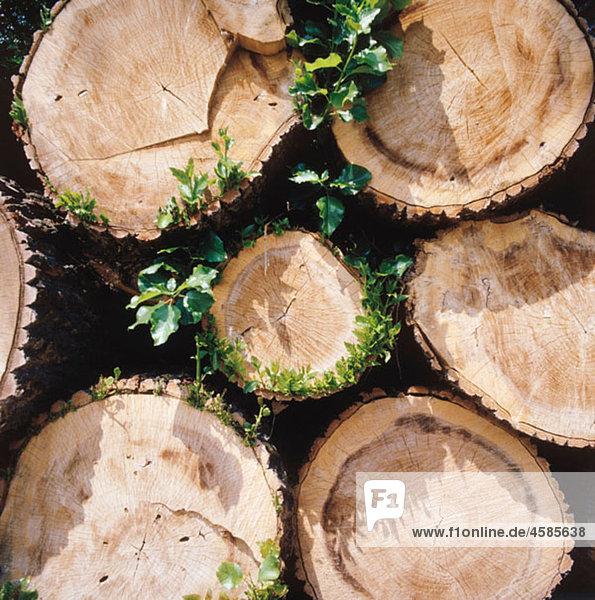 Abholzen,Aussen,Farbe,Gestapelt,Haufen,Holz