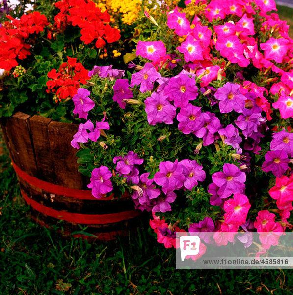 Aussen,Bayer,Bayern,Blume,Blumentopf,Botanik