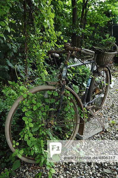12 ambiance jardin diebolsheim elsass europa for Ambiance jardin diebolsheim