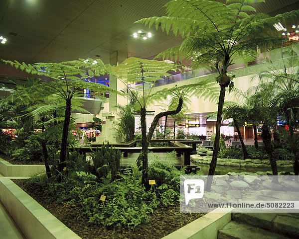 Tree ferns in an indoor garden at Singapore airport - Rights ...