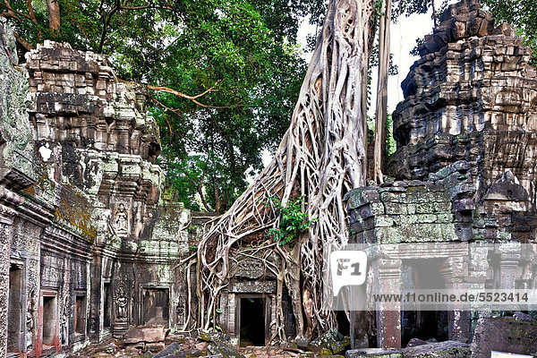 angkor ta prohm von luftwurzeln der w rgefeige ficus. Black Bedroom Furniture Sets. Home Design Ideas