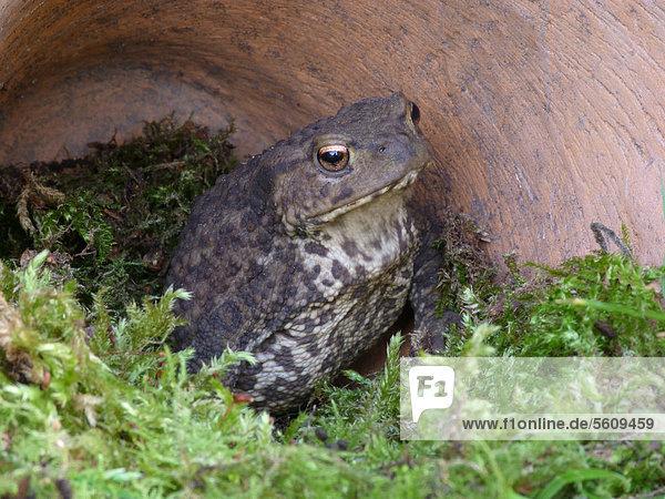 Ausgewachsenes tier sucht schutz in einem terrakotta for Tier blumentopf