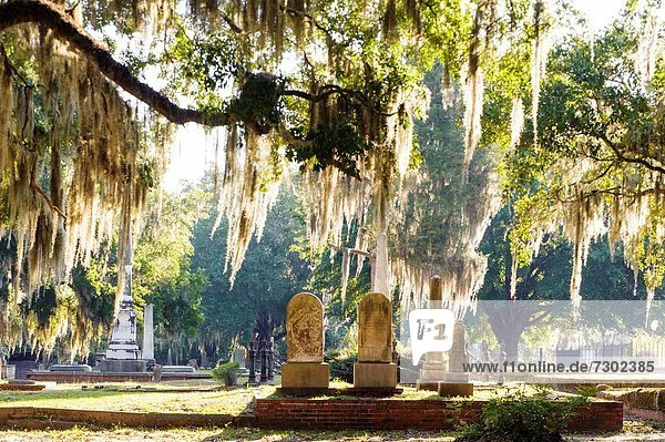 Alabama baum eiche friedhof lifestyle moos spanisch - Baum auf spanisch ...