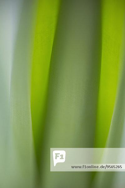 Detail,Details,Ausschnitt,Ausschnitte,Pflanzenblatt,Pflanzenblätter,Blatt