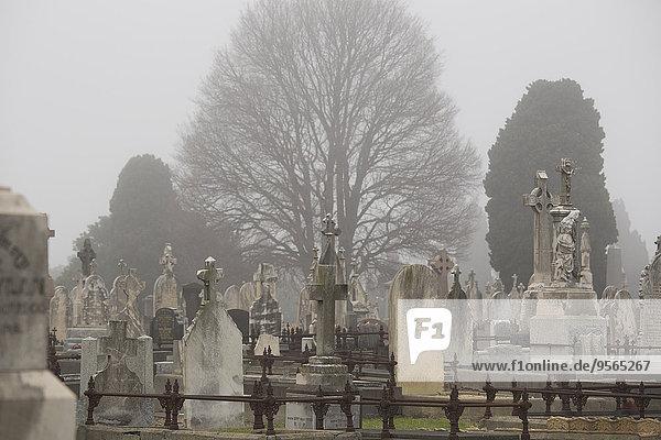 Baum,Victoria,Grabstein,Australien,Friedhof,Melbourne