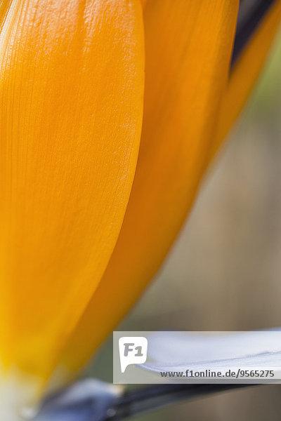 Detail,Details,Ausschnitt,Ausschnitte,Blume,Blütenblatt