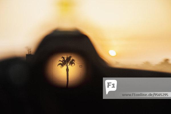 Sonnenuntergang,Baum,Loch,Palme
