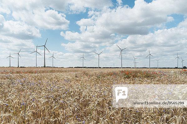 Nutzpflanze,Bauernhof,Hof,Höfe,Wachstum,Windmühle