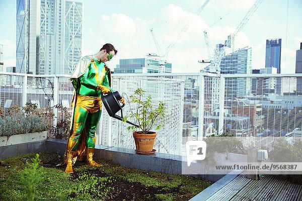 Dach,Wasser,Superheld,Großstadt,Pflanze,Topfpflanze