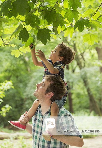 tragen,Menschlicher Vater,Sohn,geben,Menschliche Schulter,Schultern