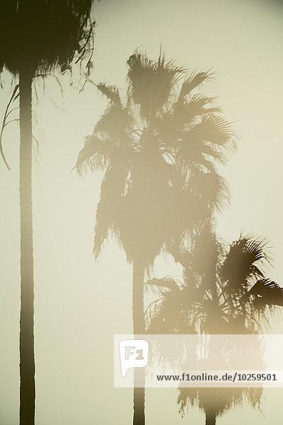 durchsichtig,transparent,transparente,transparentes,Sonnenuntergang,Baum,Himmel
