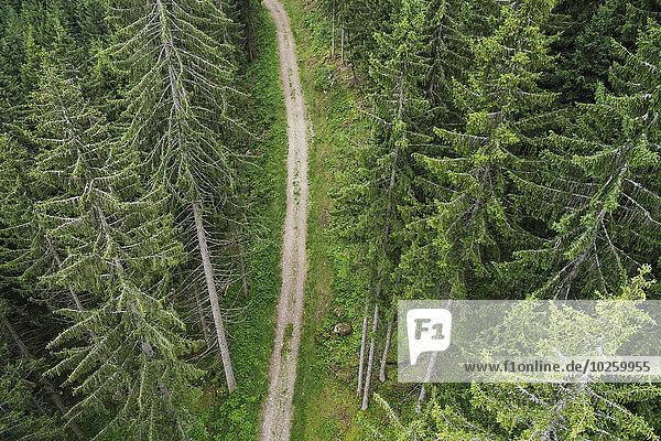 hoch,oben,Baum,Fernverkehrsstraße,schmutzig,immergrünes Gehölz,Ansicht,Flachwinkelansicht,Winkel