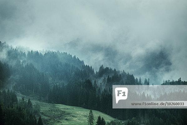 Baum,Nebel,Feld,Kiefer,Pinus sylvestris,Kiefern,Föhren,Pinie,Wetter