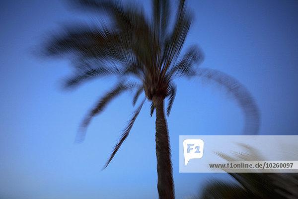 durchsichtig,transparent,transparente,transparentes,Bewegung,Baum,Himmel,blauer Himmel,wolkenloser Himmel,wolkenlos,blau,Bewegungsunschärfe