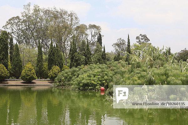 Baum,Himmel,Wachstum,Teich