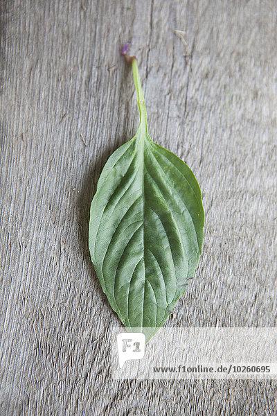 Holztisch,über,Pflanzenblatt,Pflanzenblätter,Blatt,Basilikum,schießen,gerade