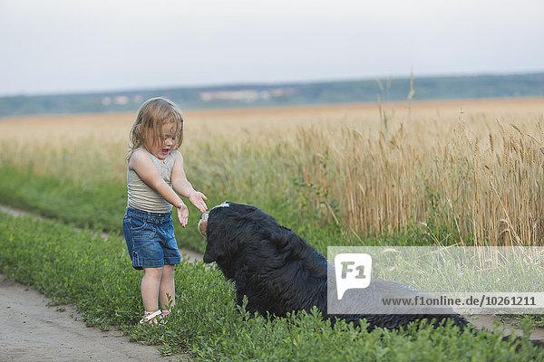 Hund,Feld,Mädchen,spielen
