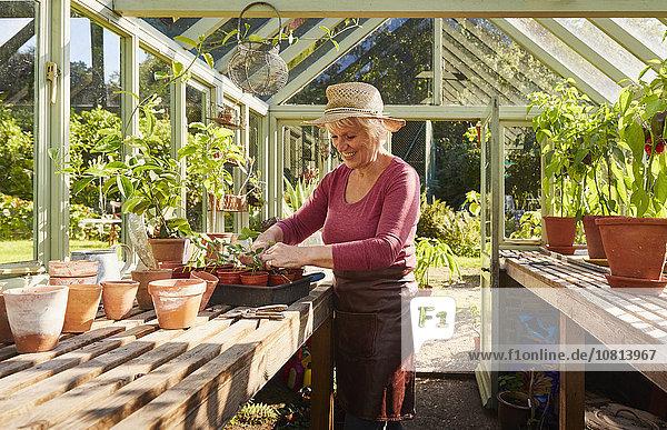Senior,Senioren,Frau,Pflanze,Sonnenlicht,Treibhaus,eintopfen