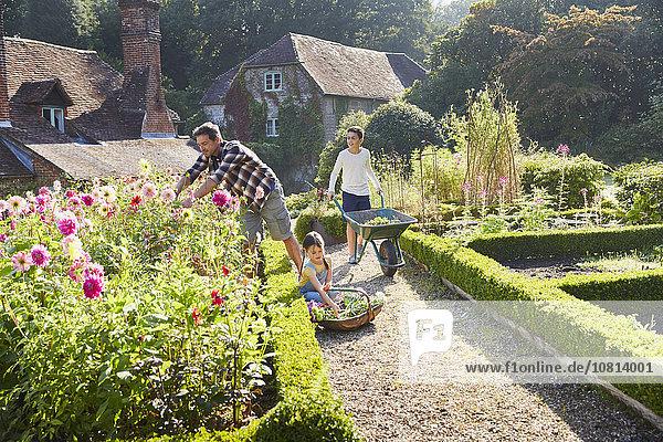 Blume,Garten,Gartenbau,Sonnenlicht
