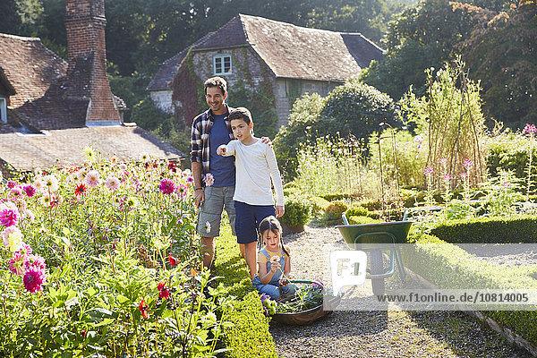 Blume,Garten,Sonnenlicht,aufheben