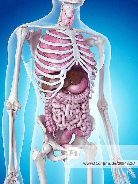 denoting organs Experts say that the organs from one donor can save or help as many as 50 people read about the how to become an organ donor.