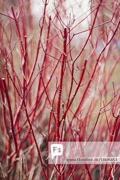 Ast,Außenaufnahme,Baum,Botanik,Close-up,Das Unbekannte