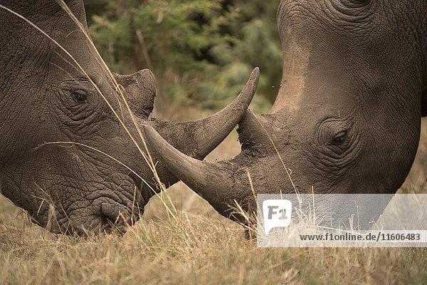 2,Afrika,Anzahl,Außenaufnahme,bedrohte Tierart,Botanik