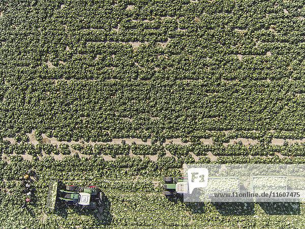 Agrarland,Anzahl,Attraktivität,Aufsicht,Außenaufnahme,Bauernhof