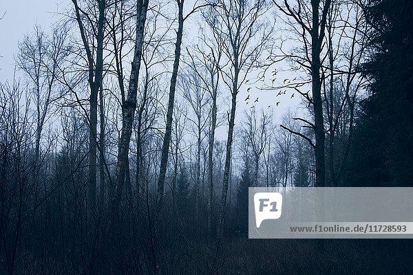 Anzahl,Attraktivität,Außenaufnahme,Baum,blau,Botanik